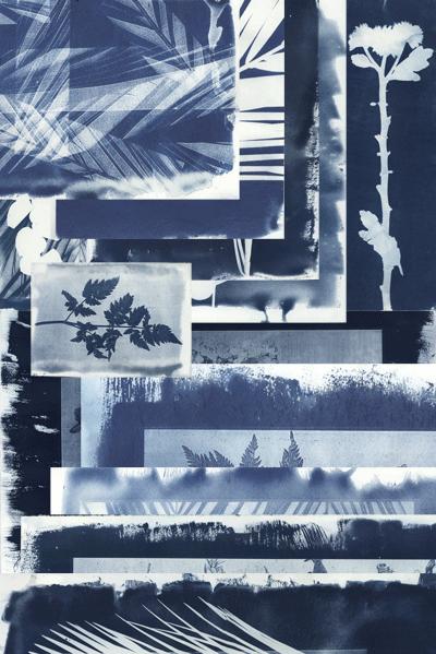 Cyanotype - Blue